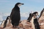 Google déploie Penguin 4.0 : l'algorithme est désormais mis à jour en temps réel